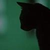Аватар для Артем Мартынов